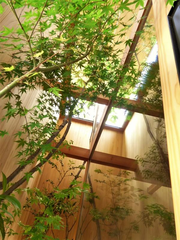 新しい施工例 ~樹木カーテン~